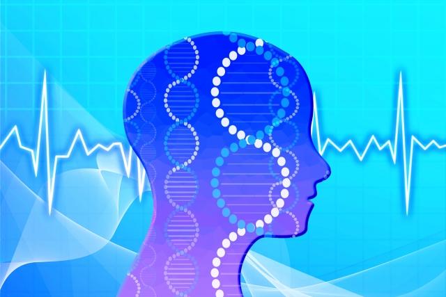 人の脳波のイラスト